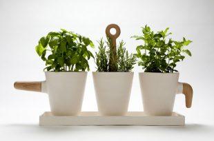 گیاه تصفیه هوا