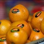 سازمان غذا و دارو مسوول نظارت بر میوهها نیست